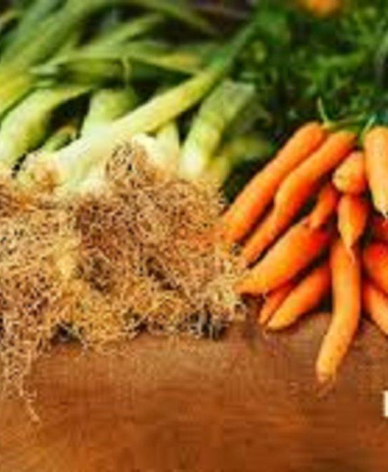 Ya están disponibles para retirar las semillas de la temporada primavera/verano